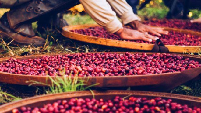 Capricornio Coffees